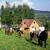 podkova-kone